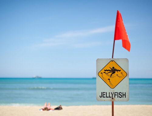 ハワイ旅行計画時に必見!楽しい旅行にする為のクラゲ対策